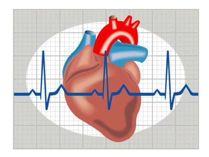 Regularizes Heart Rate