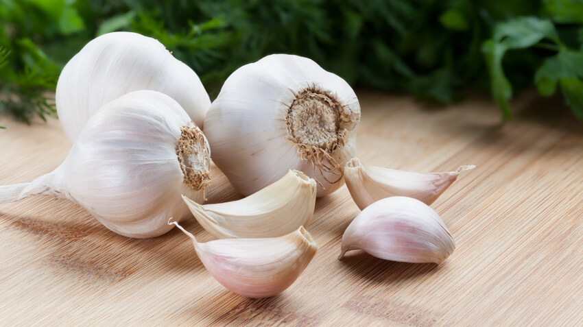Is Garlic dangerous and poisonous
