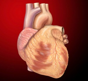 Important Points for Healthy Heart Causes & Symptoms Of Heart Disease