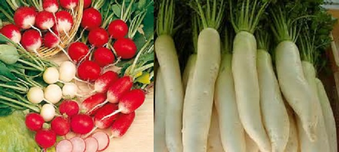 Health Benefits and Medicinal Properties of Radish