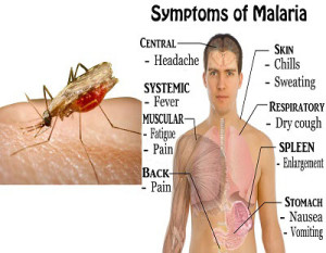 Malaria Symptoms Causes Prevention and Treatment