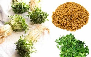 Diabetes Treatment through Fenugreek Seeds-Maduca-Mango Leaves