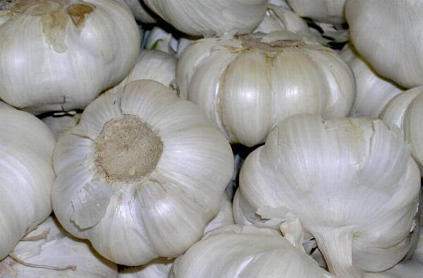 Chemicals Drenched on Garlics