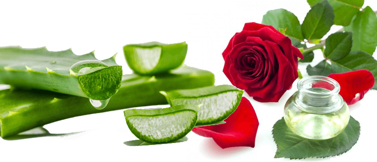 Rose water and Aloe Vera for De-tanning